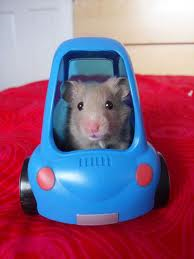 mouse in a car